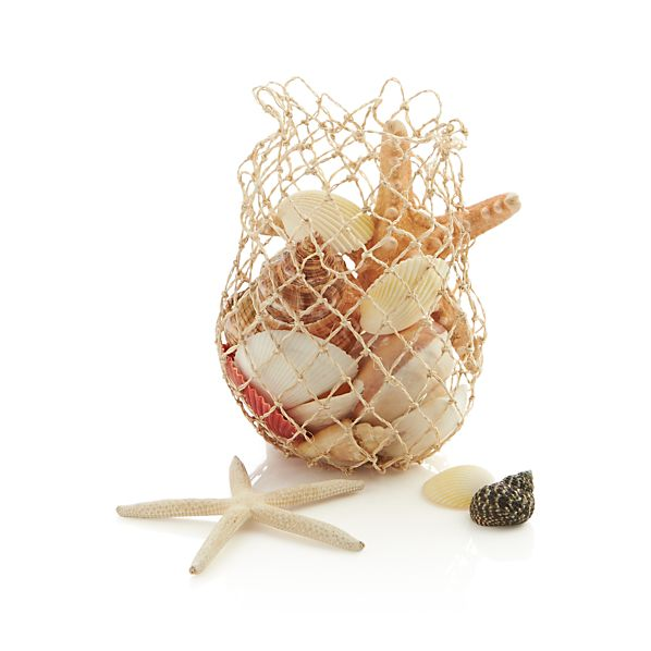 Assorted Shells in Bag