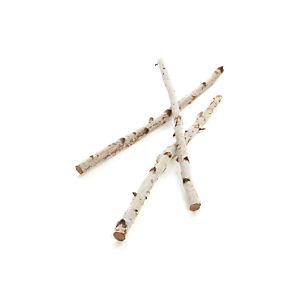 Short Birch Branches Set of Three
