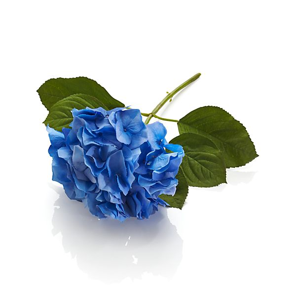 BlueHydrangeaS14