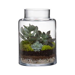 Boris Hurricane-Terrarium