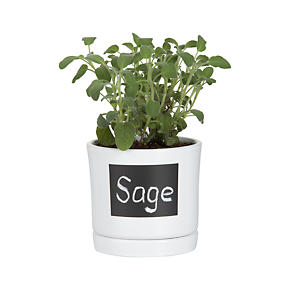 Chalkboard Herb Pot with Saucer