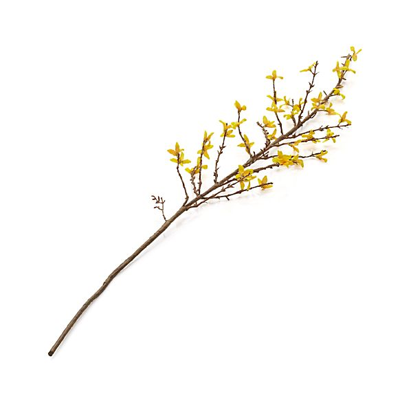 ForsythiaStemS14