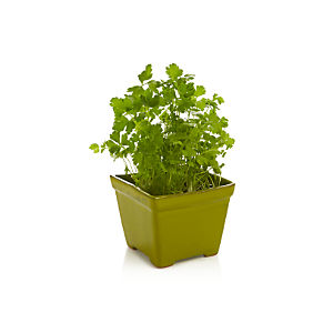 Green Herb Planter