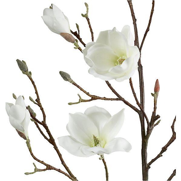 MagnoliaBranchS2AV2S13