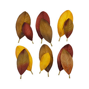 Magnolia Scatter Leaves Set of 12