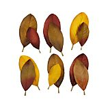 Set of 12 Magnolia Scatter Leaves