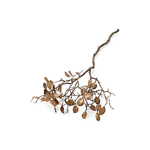 Manzanita Gold Branch