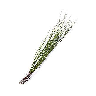 Moss Twigs