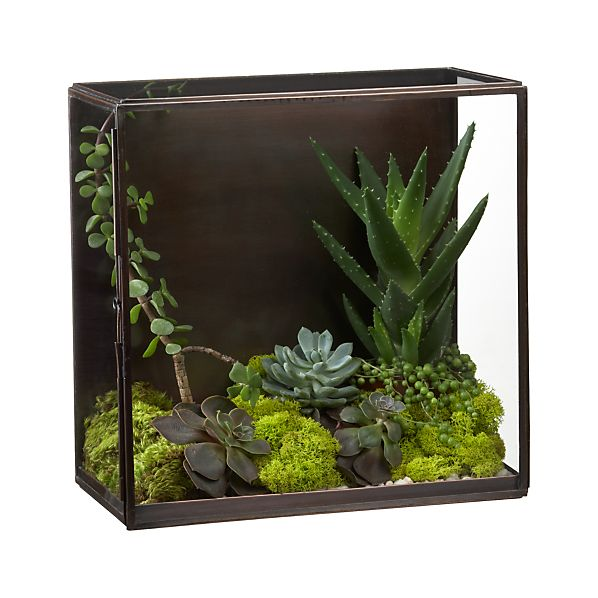 NaliniShdwBxTerrariumS12
