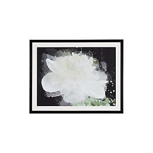 White Peony Print