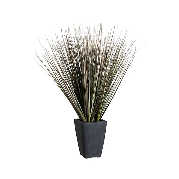 Potted Dune Grass