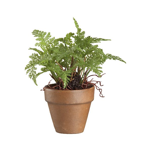 Mini Potted Fern