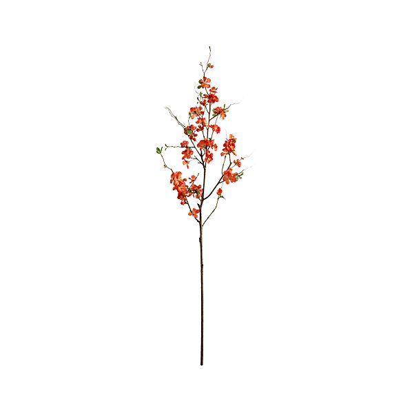 Quince Branch