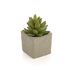 Potted Medium Succulent