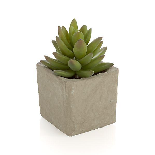 Potted Artificial Medium Succulent