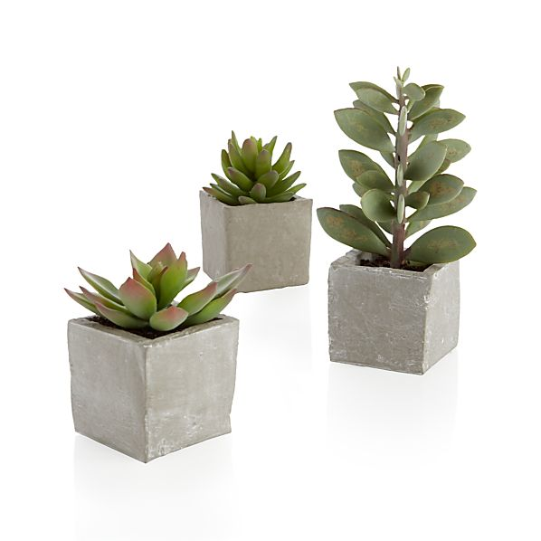 3-Piece Potted Succulent Set