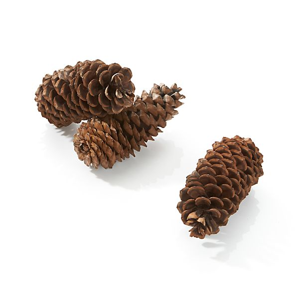Set of 3 Sugar Cones