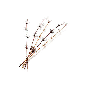 Bamboo Bigode