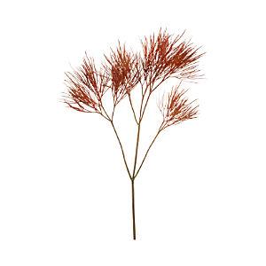 Wild Grass Stem